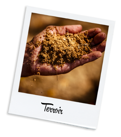 Terroir grains & moulu